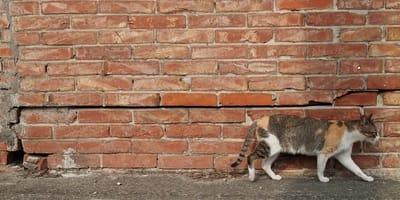 Brolo, il paese dei gatti (e non solo): 4 luoghi cat-lovers in Italia