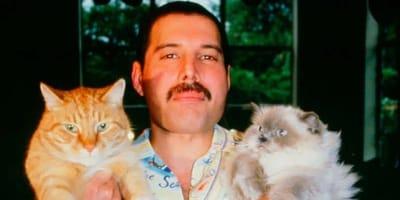 Freddy Mercury con due gatti in mano