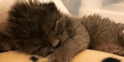 gattino-neonato-dorme-su-coperta-dalmata