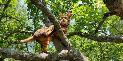 gatto-sull-albero