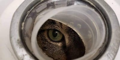 kot spoglądający przez dziurę