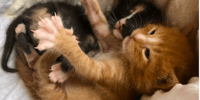 gattini abbracciati