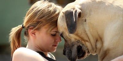 woman pressing her head against mastiff's head