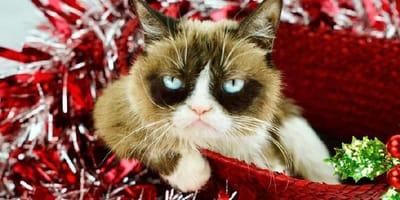 grumpy-cat-in-un-cesto-rosso