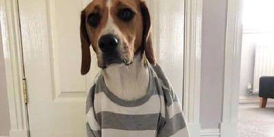 cane-con-pigiama