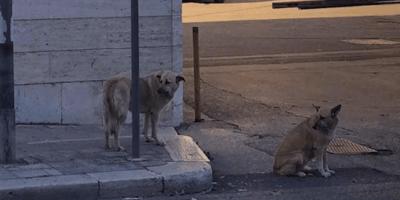 cani-per-strada