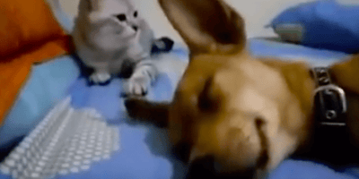 cane-e-gatto-sdraiati