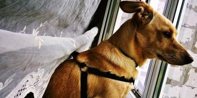 6 cose che i cani possono prevedere con il loro istinto