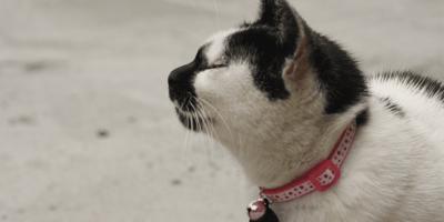 Come localizzare il tuo animale? Usa il collare gps per gatto