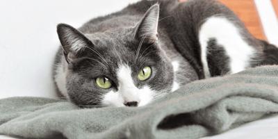 gatto-con-picacismo
