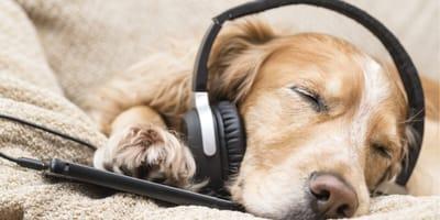 Czy muzyka relaksacyjna dla psów faktycznie działa?
