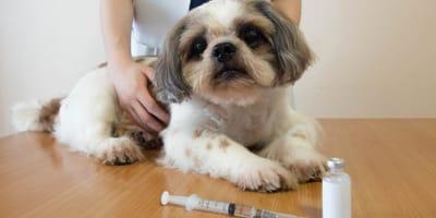 Was muss man über die Impfung gegen Tollwut wissen?