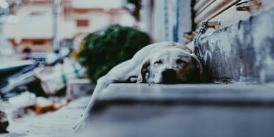 Dog sleeping on stairs