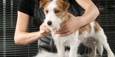 Fellpflege für den Hund: Tipps für Kurzhaar und Langhaar