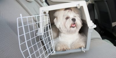 hund-in-transportbox-im-auto