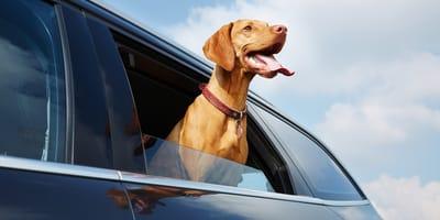 Hund im Auto: Hilfreiche Tipps für eine sichere und gute Fahrt
