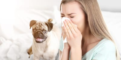 allergie-frau-mit-taschentuch-und-hund-im-hintergrund