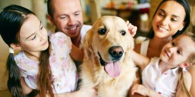 Familienhunde: Ideale Rassen für Familien mit Kindern