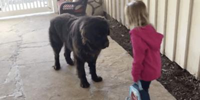 Pide a su hija que se despida de su perro: su respuesta le parte el corazón (Vídeo)