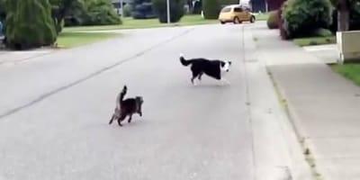 gato persigue perro