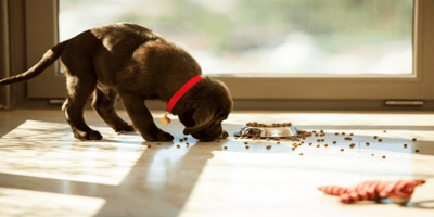Everything you need to know about puppy feeding times!
