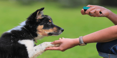 Become an expert: tips for clicker training dogs!