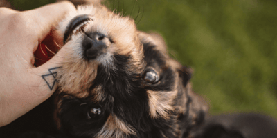How to stop a puppy from biting – 7 suggestions to try