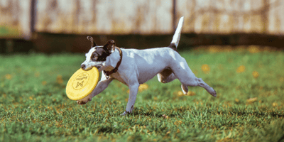 5 best dog exercise routines to keep your dog fit