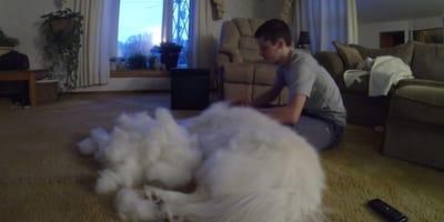 humano cortando el pelo al perro