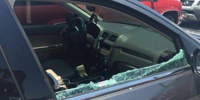 romper ventanilla coche cachorro