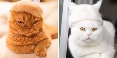 gatos sombrero de pelo