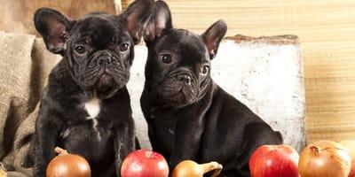 frutas tóxicas para los perros