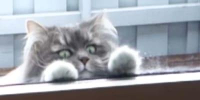 gato pide entrar