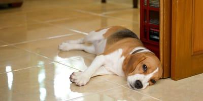 Si tu perro no te saluda como antes al llegar a casa, esto te interesará