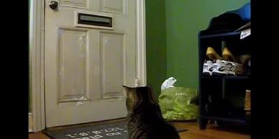 gato delante de la puerta