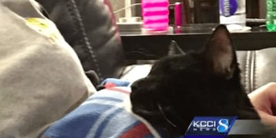 black cat sitting on owner's lap
