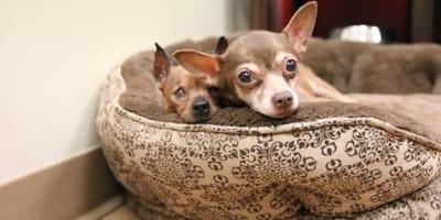 perras mayores juntas