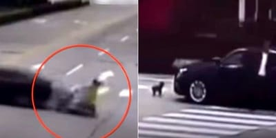 Watch: Faithful dog chases car that hit his owner's motorcycle