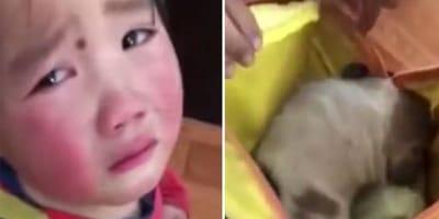 niña llorando por perro