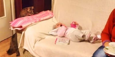 tabby cat stares at baby dressed in pink