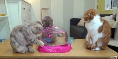 tres gatos pescando