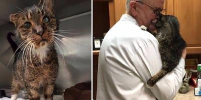 senior tabby cat held in vets arms