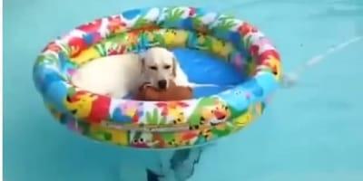 Golden retriever se lanza a la piscina con su mejor amigo: el final te encogerá el corazón (Vídeo)