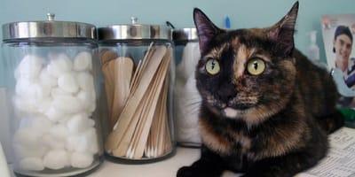 11 síntomas que los propietarios de un gato jamás deben ignorar