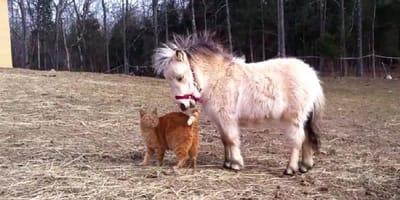 gato y poni