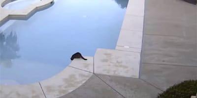 gato negro sentado al borde de la piscina