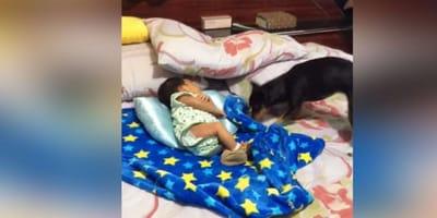 La bebé dormía al lado de su perro: cuando él tira de la manta, su madre rompe a llorar