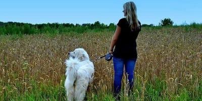 pasear perro beneficios