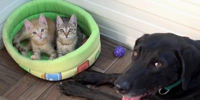 Unos gatitos  abandonados encuentran un nuevo papá que les enseña todo sobre la vida