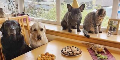 cumpleaños perros con amigos